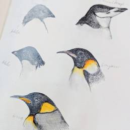 Penguin sketches