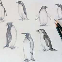 Penguin Sketches